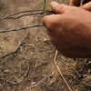 "Modifying and Setting Snares For Predator Trapping: ""Loaded"""