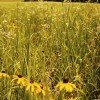 Native Warm Season Grasses: Switch Plans