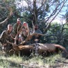 """Arizona"": Archery Elk Hunting"