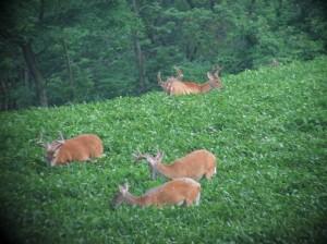 Deer Management