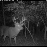 Trail Cameras for Deer Management