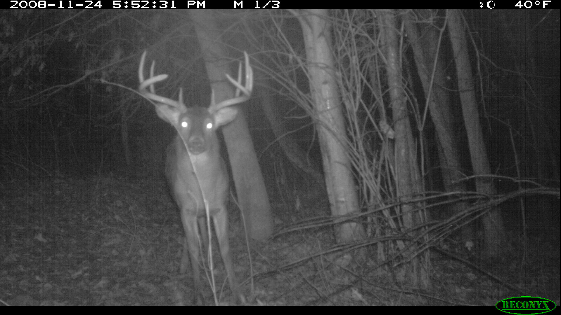 Trail Cameras in Bedding Areas