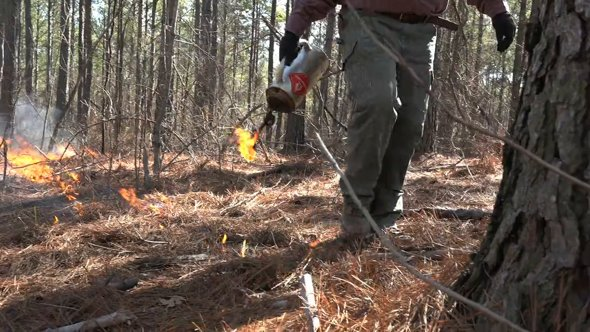 Controlled Burn For Wildlife