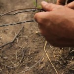 Snares Predator Trapping How To