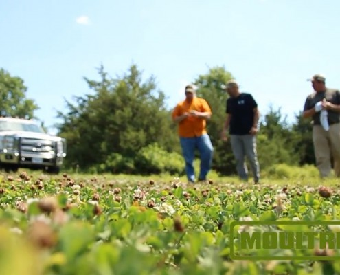 Food Plot Hunting Pressure