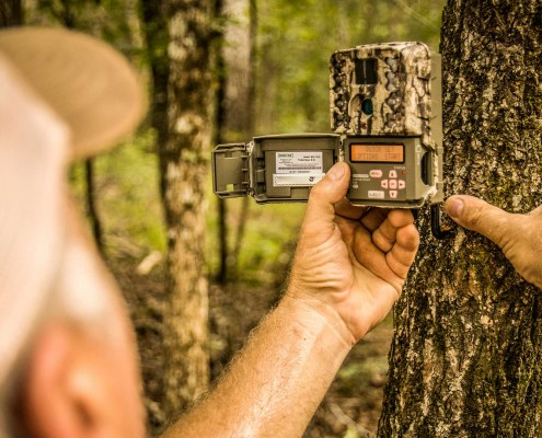 Trail Camera Survey Part 2