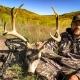 Mule Deer Hunting Nebraska