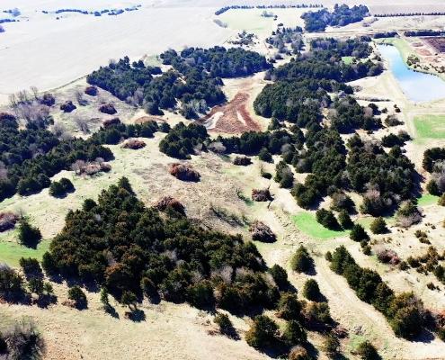 Cedar Tree Management